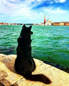 Photo by Silvio Olmeo, Venezia