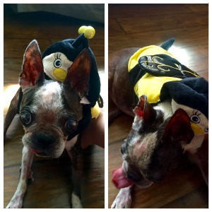 Abby the bumble bee