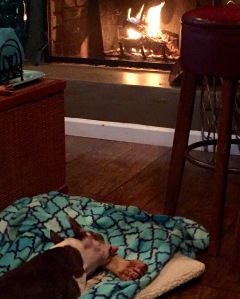Abby with her bone by the fire