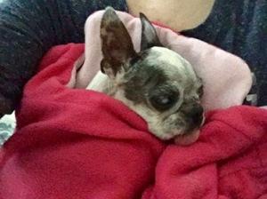 Abby in sleeping bag