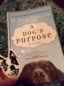 """My Boston Terrier bookmark and """"A Dog's Purpose"""" by W. Bruce Cameron"""