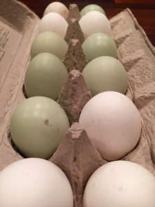 blue and white eggs from Ely