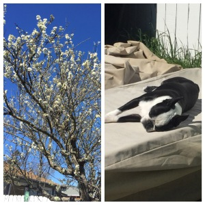 Plum blossoms and sunshine collage
